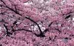 o olor da primavera
