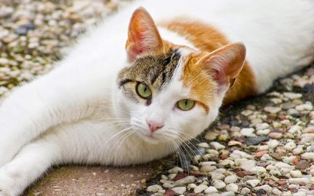 hình mèo con