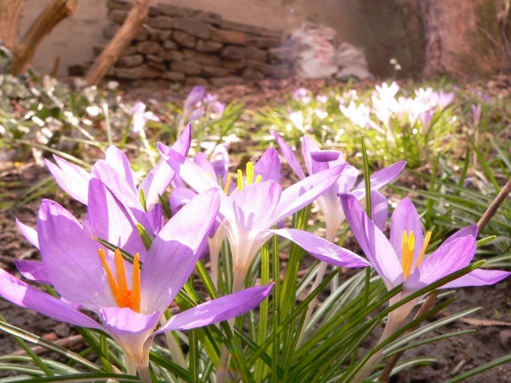 Frühling Wiese
