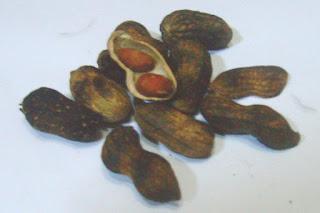 Kacang Khas Jepara