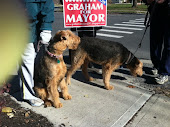 Airedales for Graham !