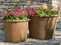 Botanic Pots