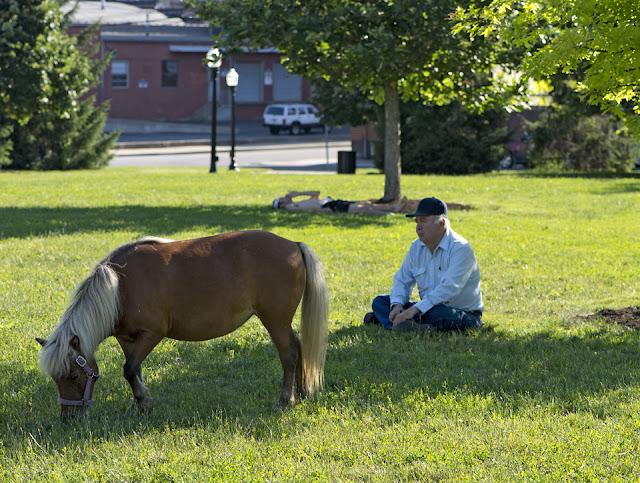 Pony, Shetland Pony, Northside, Hoffner Park