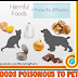 Foods Poisonous to Pets