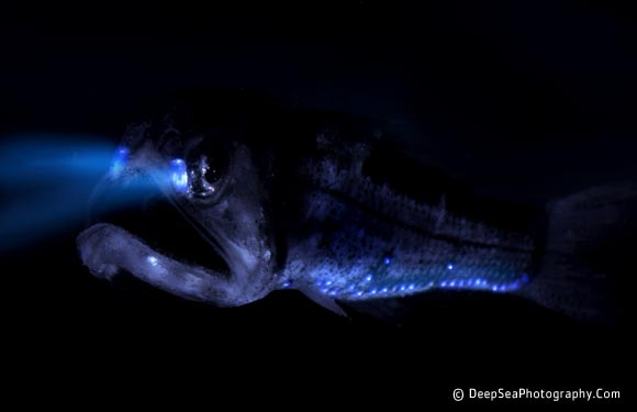 DEEP BLUE HOME: GLOW-IN-THE-DARK OCEAN