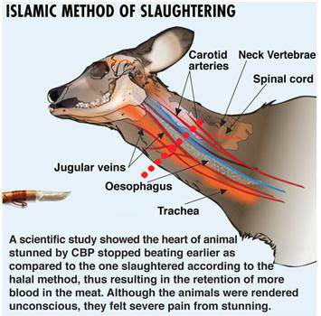 What is Islamic Slaughtering or zabihah or simply halal meat.