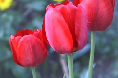 rot Frühling