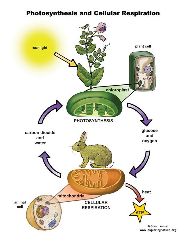 Biology And Geology 1 U00ba Eso  Nutrition