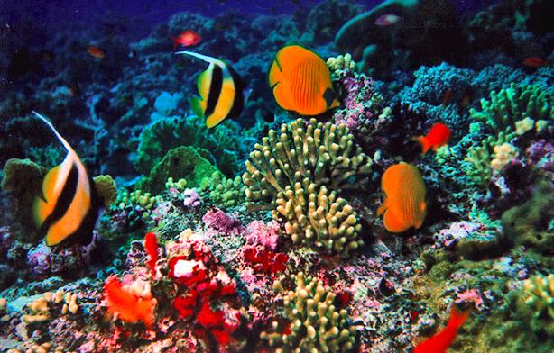 gambar ikan di laut - gambar ikan