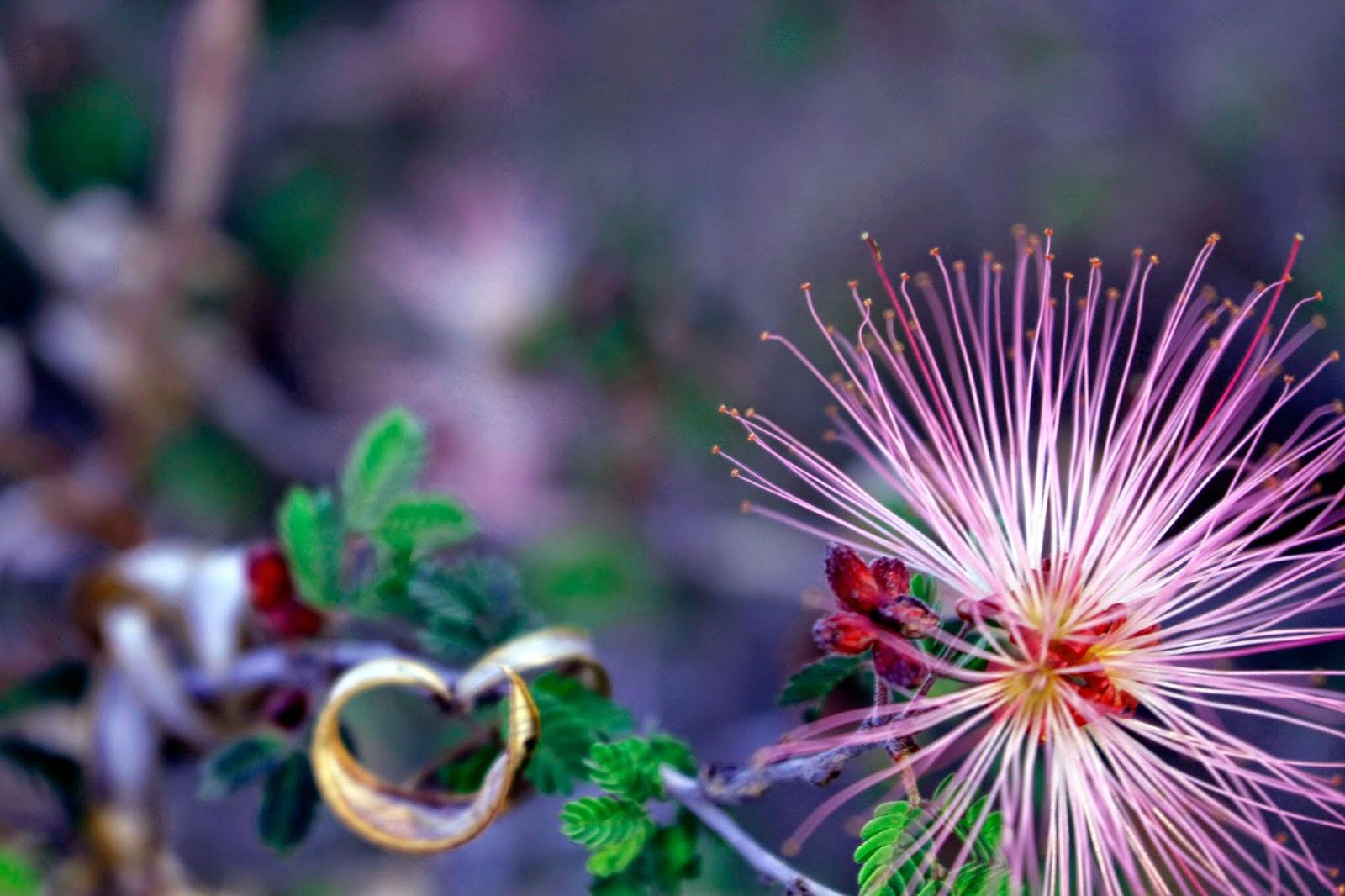 Local Love: Desert Flowers