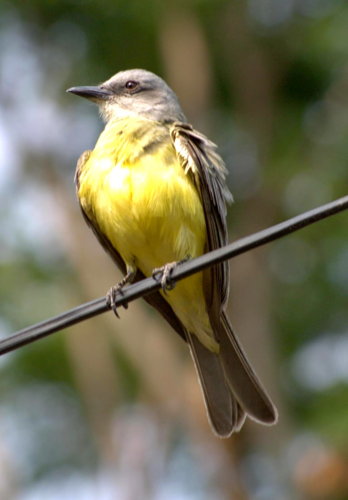 aves en Nicaragua