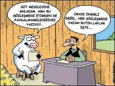 sözleşmeli inek