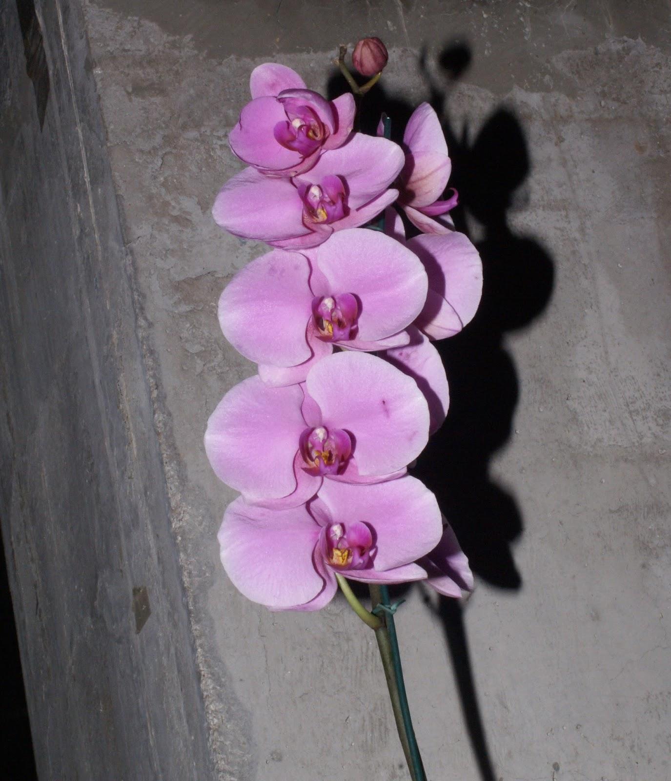 Orquídeas que florescem o ano todo!!!