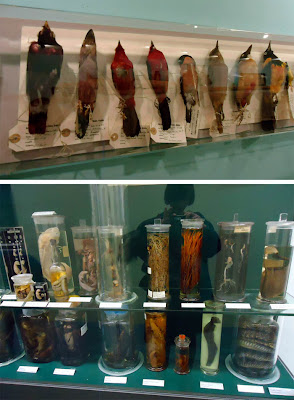 Glass jars at Booth Museum