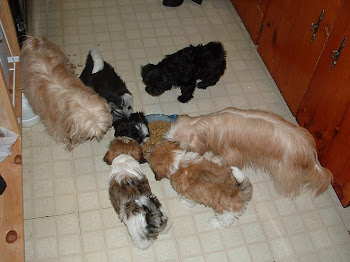 The Gang 10 weeks