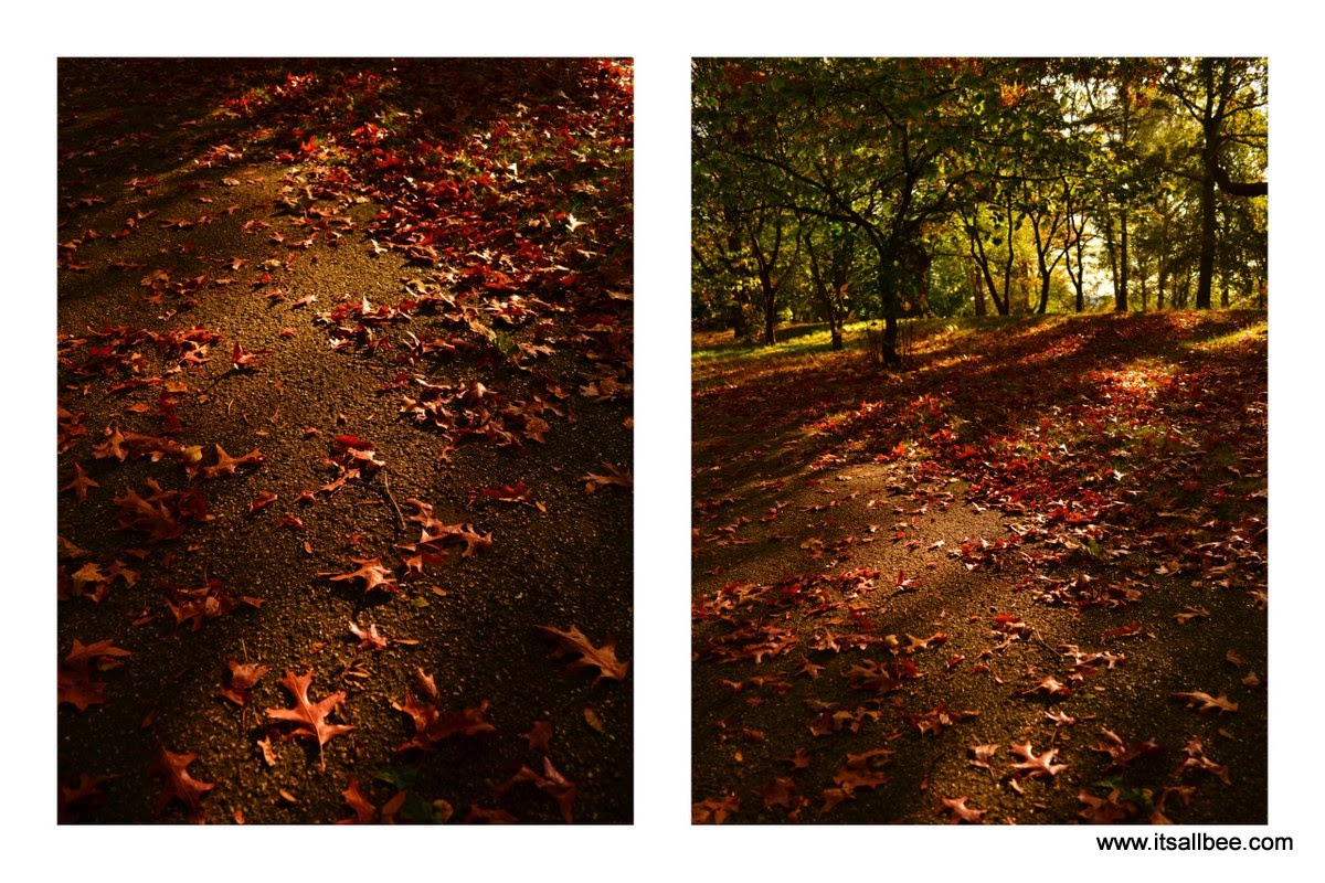 Richmond Park | Colours of Autumn