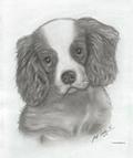 https://lh6.googleusercontent.com/-pdGaQvGs6xg/UxeIBlPRzCI/AAAAAAAAA4k/-JlNU3koyBY/s2560/Puppy_Dog.jpg