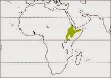 Hemprich´s hornbill Lophoceros hemprichii