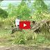 Movie Khmer Tiger Toy Full ( វេទមន្តខ្លាសីល្ប៍ )