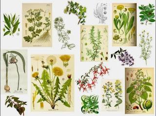 Cultivo de Plantas Aromaticas en España