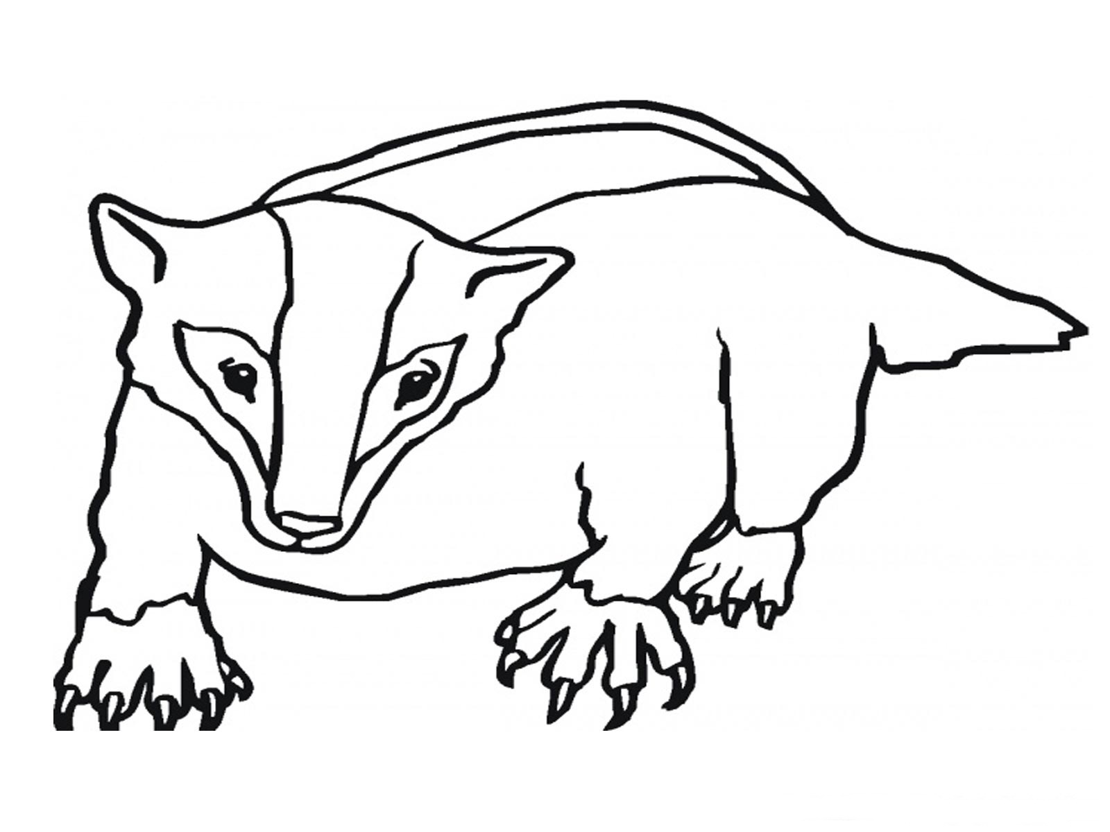 coloring pages badgers - photo#3