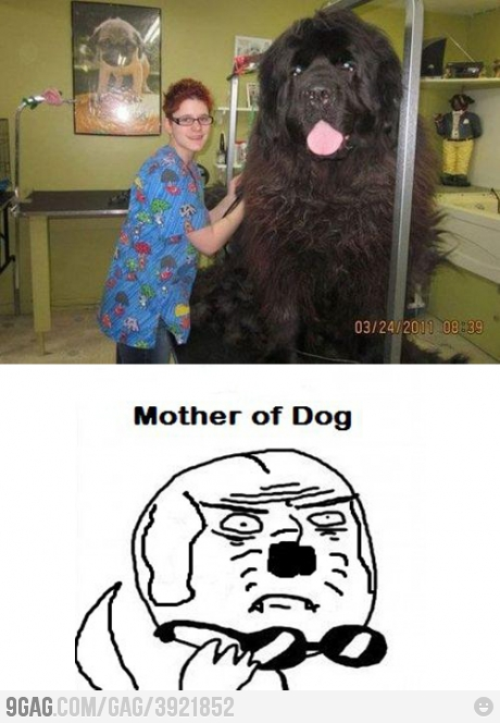 Largest Dog Bigger than Human