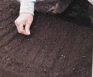 Kỹ thuật phương pháp hướng dẫn cách trồng rau muống hạt tại nhà