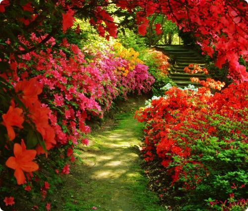 flores no jardim de deus : flores no jardim de deus:Acredite em Você!: A mão de Deus.