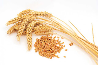 wheat Cholesterol lowering foods