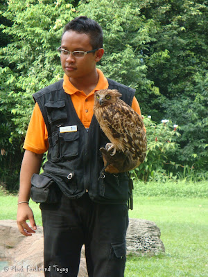 Jurong Bird Park - Kings of the Skies Show Batch 2 Photo2