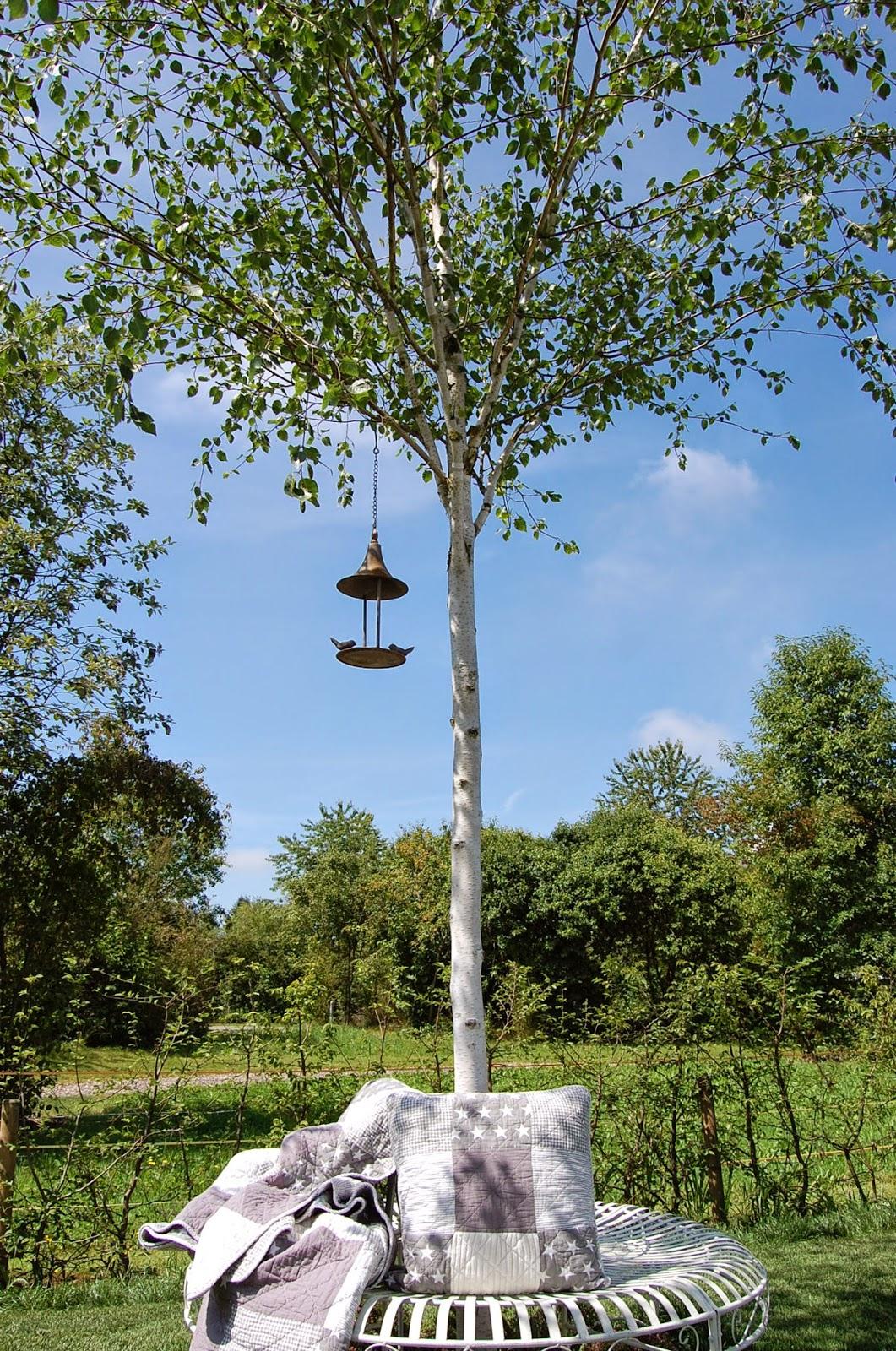 Himalaya Birke villajenal betula utilis doorenbos