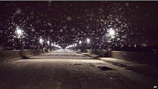 Parece Neve: Qual inseto foi responsável por esse visual?