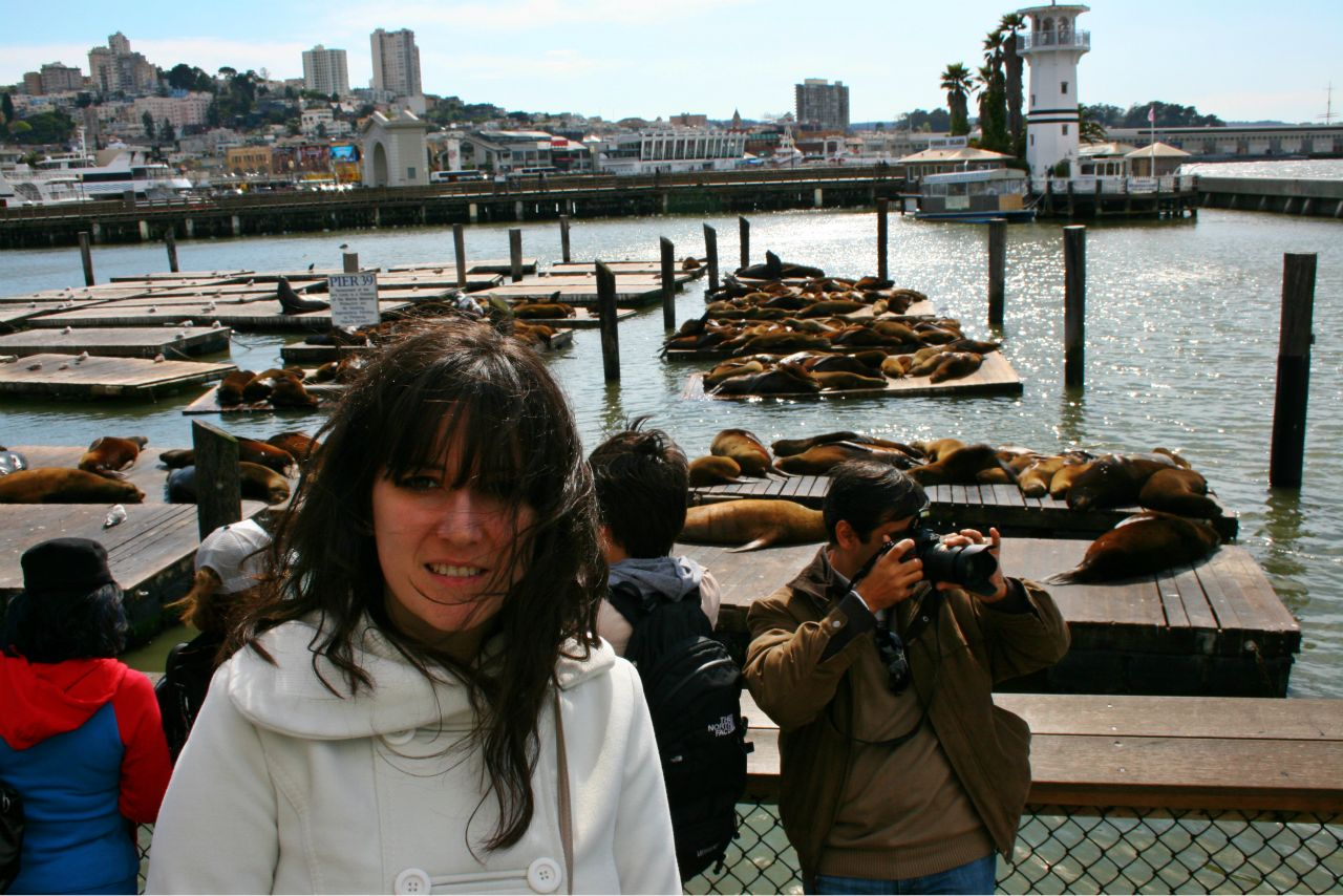Fisherman's Wharf San Francisco Pier 39. Leones marinos
