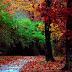 Autumn Beautiful Forest desktop wallpaper