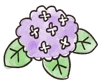 紫陽花のイラスト(梅雨)