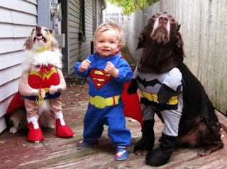 funny picture: child spiderman with 2 dogs