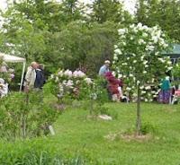 image Lindsay Lilac Gardens