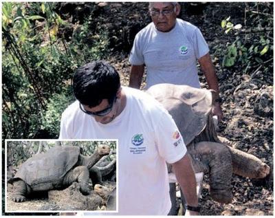 Petugas Taman Negara Galapagos mengangkat jasad Lonesome Geroge. (Gambar kecil) Lonesome George.