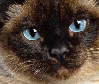 У кота глаза цвета твиттера