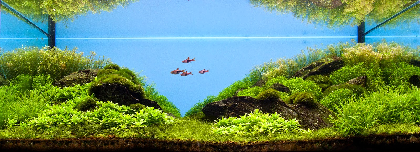Aquascaping spain las termopilas by manuel ortiz mu oz - Aquascape espana ...