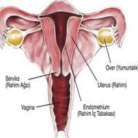 kb, suntik, hamil, mengandung, rahim, ovarium, ovum, uterus, tuba falopi, vagina, hamil, pil kb