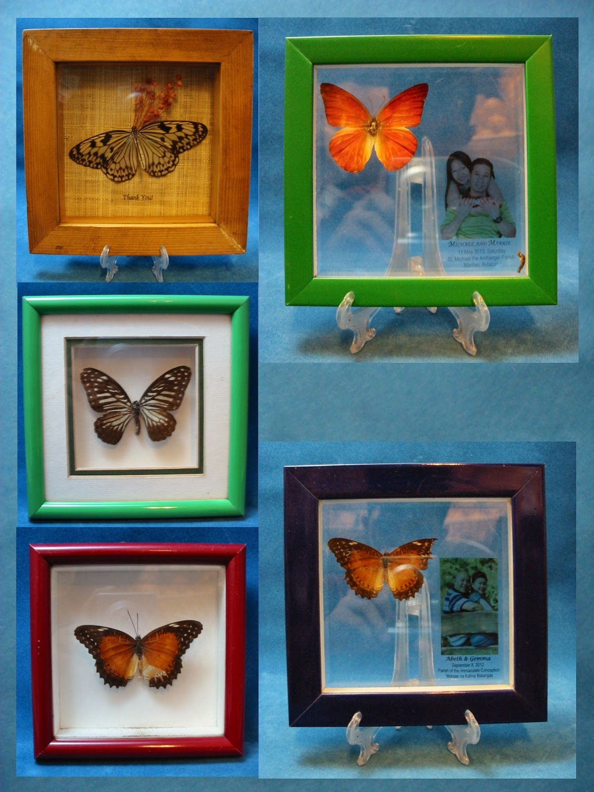 Acclaim Butterflies: Butterfly Inspired Souvenirs