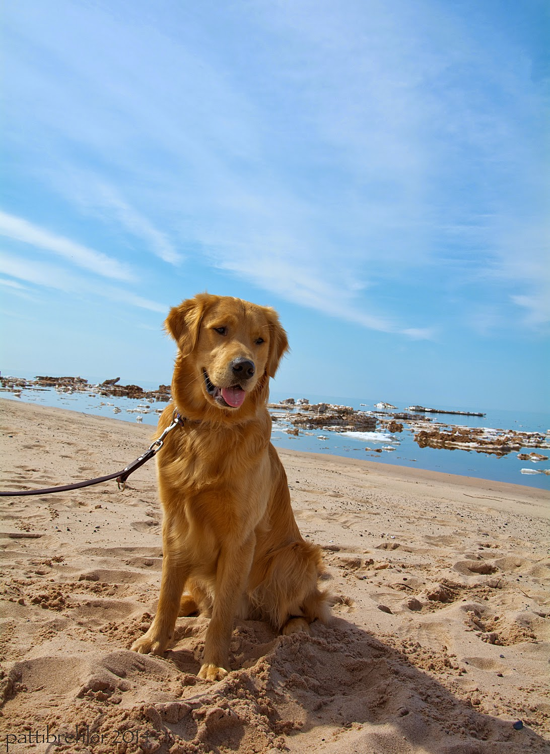 A grown Golden Retriever sits on a sandy beach looking to the right of the camera. A leash hangs from his collar to the left, the person holding the other end is not in the photo. Behind the dog is the ice flow strewn waters of Lake Superior. The bergs are covered in sand. The sky behind and above the dog is a brilliant blue.