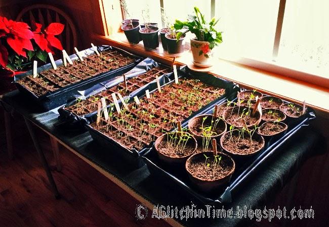Seedling flats for spring 2014