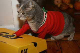 cat in the red sweater
