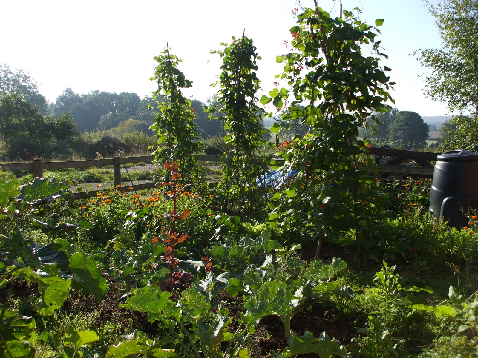 Oak House Permaculture: Going Perennial in the Vegetable ...