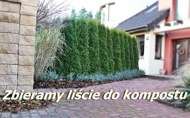bosch, liście, kopost, odkurzacz ogrodowy, blog DIy, lifestyle, porady ogród, dom inspiracje