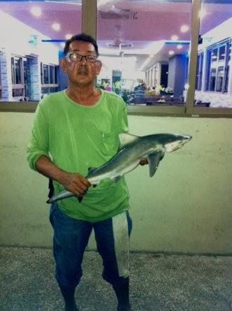 Grey Shark [ Chiloscyllium griseum ] also know as Sua Heur 鲨鱼 [Chinese] or Yu Garang [Malay] weighing 3kg plus caught by Ah Tan at Woodland Jetty on 11th November 2013.