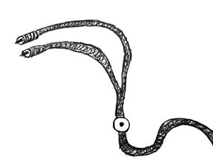 Fosiles Analiticos II  Dibujo