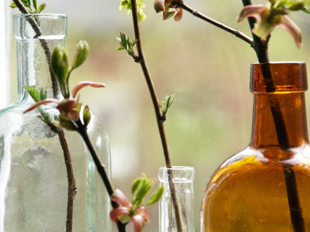 Lönnkvistar i flaskor. Foto: Anette Brunsell för blogg Rost och Rädisor